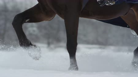 stepping : SLOW MOTION CLOSE UP DOF: Big powerful dark bay horse trotting through white snowy blanket. Powerful brown gelding stepping on field covered with dry powder snow, snowflakes rising and flying around Stock Footage
