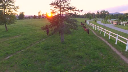 corral : AERIAL, MOVING FORWARD: Flying above group of young and old horses running on vas meadow field on beautiful golden sunset. Senior horses playing freely on vast ranch near suburban city at sunrise