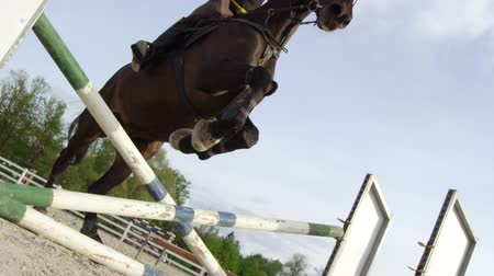 rider : SLOW MOTION, CLOSE UP, LOW ANGLE: Horsegirl riding strong brown horse jumping the fence in sunny outdoors sandy parkour dressage arena. Competitive rider training jumping over obstacles in manege Stock Footage
