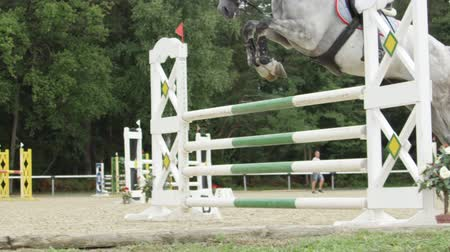 show off : SLOW MOTION, CLOSE UP: Beautiful grey horse jumping over fence and performing in competitive jumping event in outdoors sandy parkour riding arena. Unrecognizable person horseback riding stallion