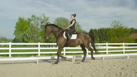 stallion : SLOW MOTION, CLOSE UP: Powerful tall dark brown gelding trotting in sandy outdoors riding arena. Big horse and rider training dressage on beautiful sunny day in sandy paddock at countryside ranch
