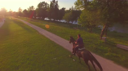 kleštěnec : AERIAL: Flying close above elder man horseback riding dark bay stallion cantering on sandy footpath and leaving cloud of sand behind. Senior, experienced horseman galloping on brown gelding at sunset
