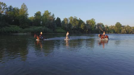 kleštěnec : AERIAL, CLOSE UP: Three cheerful, smiling girls riding white and dark brown horses along green overgrown river bank and having fun on summer vacation. Happy girlfriends on horses playing in water Dostupné videozáznamy