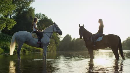 kleštěnec : CLOSE UP, SLOW MOTION: Two young smiling girls riding brown stallion and grey mare, standing in shallow river, enjoying in nature on sunny day. Strong horses chilling face to face in refreshing water