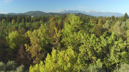 verdant : AERIAL: Flying close above stunning overgrown lush coniferous and deciduous forest and grassy glade surrounding small town with high rocky mountains and hills in background on magical sunny summer day Stock Footage