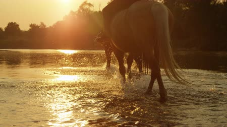 ruin : SLOW MOTION CLOSE UP DOF: Two riders riding horses and walking into magical golden sunset along the rocky riverbank. Light and dark horse going for a ride in shallow river water at beautiful sunrise Stockvideo