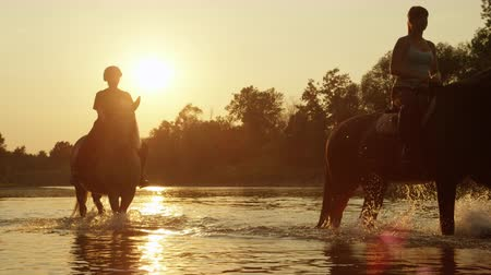 waterdrop : SLOW MOTION CLOSE UP DOF: Two riders riding horses and walking in shallow water at magical golden sunset along overgrown riverbank. Palomino and dark brown horse on ride in river at beautiful sunrise