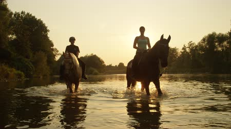 kısrak : SLOW MOTION CLOSE UP DOF: Two riders riding horses and walking in shallow water at magical golden sunset along overgrown riverbank. Palomino and dark brown horse on a ride in river at beautiful sunrise Stok Video