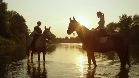 waterdrop : SLOW MOTION, CLOSE UP: Two female riders riding horses at magical golden sunset along green overgrown riverbank. Palomino and dark brown horse standing and resting in refreshing river at sunrise
