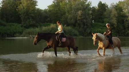 waterdrop : SLOW MOTION, CLOSE UP: Two female riders horseback riding horses in nature along overgrown riverbank at sunny summer day. Palomino and dark brown horse walking and splashing in refreshing river