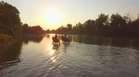 ferahlatıcı : AERIAL, CLOSE UP: Two female riders riding horses into magical golden sunset along green overgrown riverbank. Palomino and dark brown horse walking in refreshing river accompanied by small cute dog Stok Video
