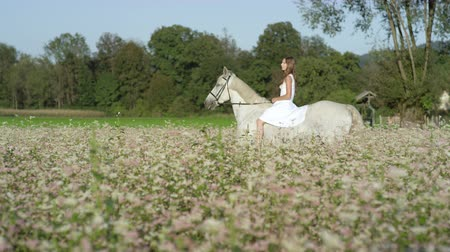 trigo sarraceno : SLOW MOTION CLOSE UP DOF: Beautiful girl in white dress bareback riding stunning grey horse through dense pink flowering field. Pretty young princess girl on fairy tale ride with mighty white stallion Vídeos