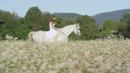 equino : SLOW MOTION CLOSE UP DOF: Beautiful girl in white dress bareback riding stunning grey horse through dense pink flowering field. Pretty young happy girl on ride with mighty white stallion in nature