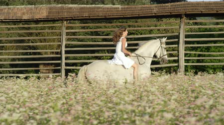 juba : SLOW MOTION CLOSE UP DOF: Beautiful girl in white dress bareback riding stunning grey horse through dense pink flowering field. Pretty young happy girl on ride with mighty white stallion in nature