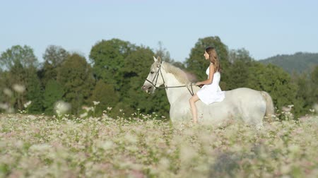 trigo sarraceno : SLOW MOTION CLOSE UP DOF: Beautiful girl in white dress bareback riding stunning grey horse through dense pink flowering field. Pretty young happy girl on ride with mighty white stallion in nature