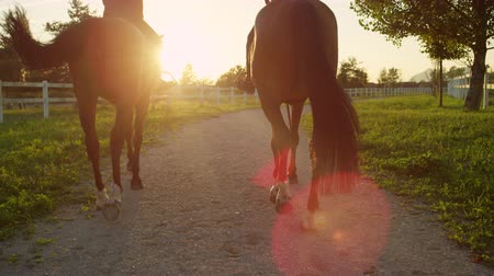 верхом : SLOW MOTION, CLOSE UP: Two young girls horseback riding amazing brown stallions walking along sandy footpath into magical golden sunset on big horse ranch farm. Friends on morning ride at sunrise