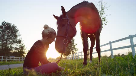 конный : SLOW MOTION CLOSE UP LOW ANGLE VIEW: Pretty blonde girl sitting on the ground, pulling fresh grass and petting her strong brown horse on stunning sunny morning. Cute young horsegirl kissing gelding
