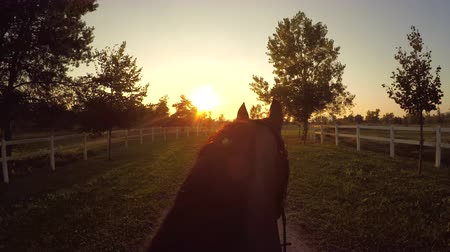 kleštěnec : FPV, CLOSE UP: Magical and relaxing evening ride on horse ranch. Horseback riding powerful dark brown stallion into golden rising sun. Beautiful gelding walking on dirty pathway in recreation park Dostupné videozáznamy
