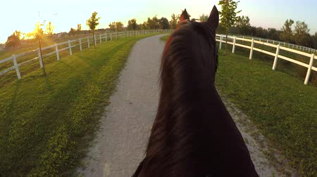 ruin : FPV, CLOSE UP: Magical and relaxing evening ride on horse ranch at sunset. Horseback riding powerful dark bay stallion into golden setting sun. Beautiful gelding walking on pathway in recreation park
