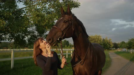 kleštěnec : SLOW MOTION CLOSE UP: Beautiful female rider kissing and petting powerful dark brown horse on stunning sunny evening before storm. Girl enjoying her summertime horseback riding vacation in nature