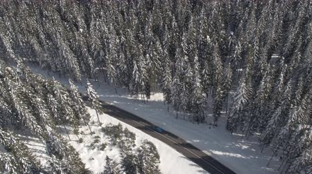 snow covered spruce : AERIAL: Flying above turquoise vehicle driving on snowy highway through dense mountain forest in winter. Road trip in stunning evergreen pine tree woods covered with fresh snow on sunny Christmas day