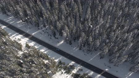 závěj : AERIAL: Flying above turquoise car driving along snowy road leading through dense evergreen mountain forest in winter. Road trip in picturesque pine tree woodland covered with fresh snow on sunny day