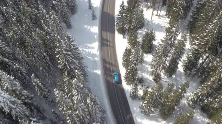 snow covered spruce : AERIAL: Flying above turquoise car driving along snowy road leading through dense evergreen mountain forest in winter. Road trip in picturesque pine tree woodland covered with fresh snow on sunny day