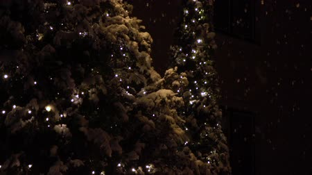 snow covered spruce : SLOW MOTION, CLOSE UP: Beautiful Christmas trees decorated with white lights glowing on celebration evening. Big soft snowflakes falling on snowy spruce treetop on magical and romantic winter night Stock Footage