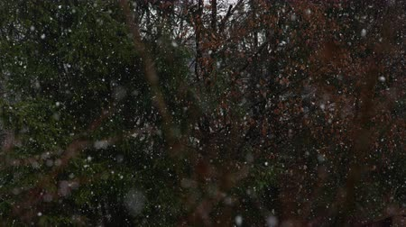 sniezynka : SLOW MOTION, CLOSE UP: Unrespectable off season heavy snow blizzard in local park in spring when trees are becoming green. Unpredictable extreme fall of temperatures and frost damage on plants Wideo