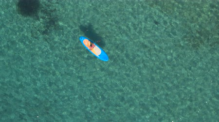 sup : AERIAL: Flying above pretty girl rider stand up paddleboarding in beautiful crystal clear turquoise tropical sea. Sun shining through transparent water revealing stunning rocky, stony and sandy seabed