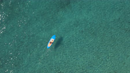 sup : AERIAL, DISTANCING: Flying above girl rider stand up paddleboarding in beautiful crystal clear turquoise tropical sea. Sun shining through transparent water revealing rocky, stony and sandy seabed