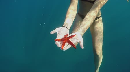 starfish : SLOW MOTION CLOSE UP UNDERWATER: Unrecognizable woman in bikini swimming in deep blue ocean holding beautiful red starfish in her hands and showing it to boyfriend. Stunning sea life on exotic island