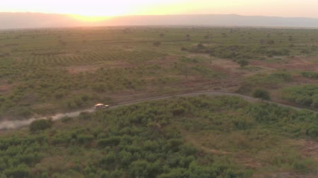 bushland : AERIAL: Flying above safari jeep leaving dusty cloud behind, game driving tourists through vast arid fields of African grassland savannah. Spectacular scenery on stunning sunny morning in wilderness Stock Footage