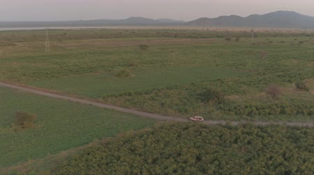 bushland : AERIAL: Flying above safari jeep leaving dusty cloud behind, game driving tourists through vast arid fields of African grassland savannah. Spectacular scenery on stunning sunny evening in wilderness Stock Footage