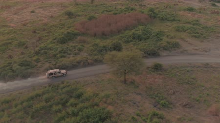 bushland : AERIAL: Flying above safari jeep on game drive leaving cloud of dust behind, driving through vast arid fields of African grassland savannah. Spectacular scenery on stunning sunny evening in wilderness