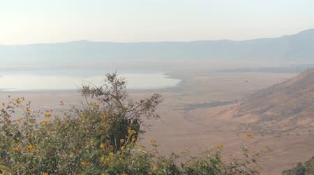 bushland : AERIAL: Breathtaking view of Ngorongoro conservation area from the rim of volcanic caldera with charming salt lake Magadi in the middle. Stunning montane forest growing on steep wall of volcano crater