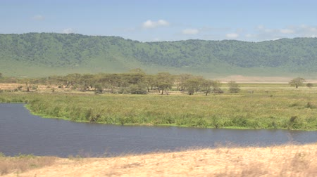 hippo : African hippopotamus soaking in stunning lake in vast wetland swamp in beautiful Ngorongoro Crater with lush grassland woodland in background. Ngoitokitok spring running through wildlife sanctuary