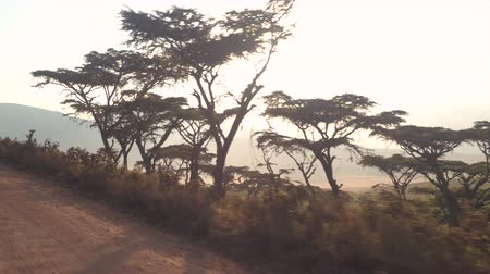 zaprášený : POV, CLOSE UP: Driving in safari truck and looking out the window on small valley surrounded by overgrown mountain ridge on sunny summer day. Lush acacia trees growing on hill slope in Serengeti park
