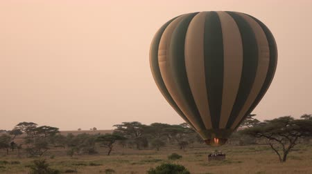 ascend : CLOSE UP: Happy tourists in safari hot air balloon getting ready for balloon ride above breathtaking Serengeti plains in early morning at rose-pink light of dawn. Pilot steering ballon by ascending