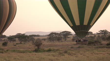 акация : AERIAL, CLOSE UP: Pilots steering safari hot air balloons by ascending to rise above tree canopies in stunning Serengeti at rose-pink light of dawn. Tourists on journey of a lifetime in wild Africa Стоковые видеозаписи