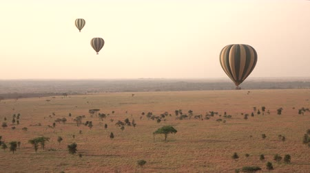 акация : AERIAL: Tourists floating in hot air balloon safari high above distant savanna plains in amazing African wilderness. Wild zebras gathering in group on the ground at stunning golden light misty morning