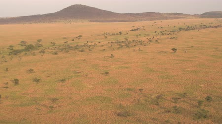 park paths : AERIAL: Flying high above stunning African wilderness, endless savannah grassland in Serengeti plains, dry open acacia woodland, vast short grass fields and overgrown mountains at golden light sunset