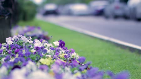 çevre : Flowers against blurred road and traffic. Stok Video