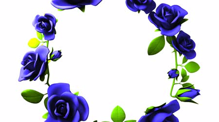 šik : Blue roses frame on white text space.3DCG rendering animation that can loop.