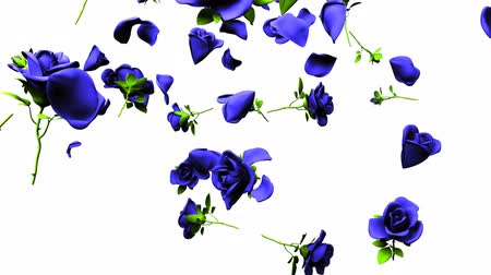 szentimentális : Falling Blue Roses On White Background Stock mozgókép