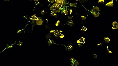szentimentális : Falling Yellow Roses On Black Background