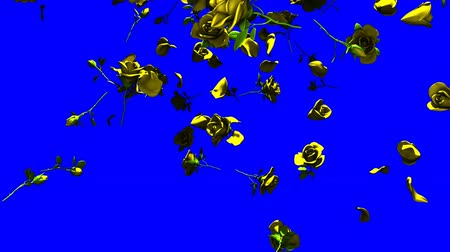 szentimentális : Falling Yellow Roses On Blue Chroma Key