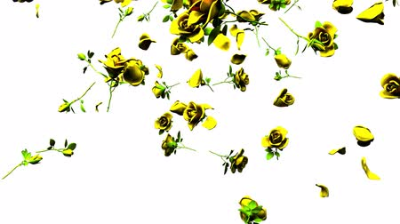 szentimentális : Falling yellow roses on white background.3DCG render animation. Stock mozgókép