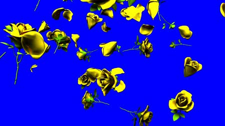 любовь : Falling yellow roses on blue chroma key.3DCG render animation.