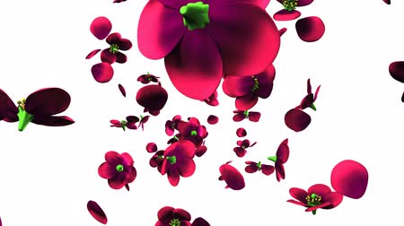 magenta flowers : Purple flowers on white background.3D render animation.